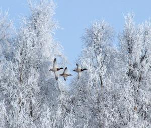 winter-76905_640